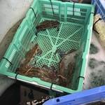 漁師家 幸 -