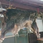 88135261 - 熊の毛皮。