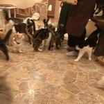 キャットカフェ てまりのおしろ - お食事タイム、スタッフに群がる…