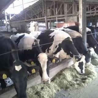 乳牛チャンピオン牧場アイス