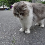 ペンションブルーポピー - 猫のおでむかえ
