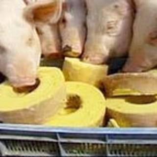 某有名店のバームクーヘンを食べて育った、『バームクーヘン豚』