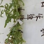 中国食堂261 -