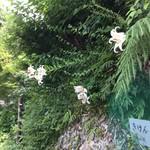 中国精進料理 凛林 - 道中に母の好きな山百合が