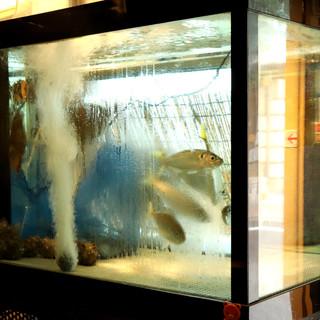 店内には、鮮魚が泳ぐ生簀が!目でも楽しめる空間です◎