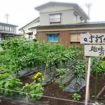 手打ちそば 趣味の店 - お庭の野菜がそろそろ収穫できそうね