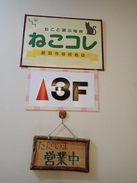 ねこコレ 新潟市役所前店 - エレベーターはミャいのでしんどいかも