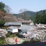 8928853 - 吉野桜を愛でながら…