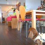 Rカフェ - 店内もワンコOKです!