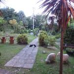 フェリス - お庭