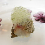 89661007 - イサキと山の香り シェフが採った蕗 ドクダミの泡