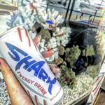 Pier Shark -