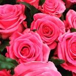 90025679 - 娘がワンサカ貰ってきた薔薇のアップ