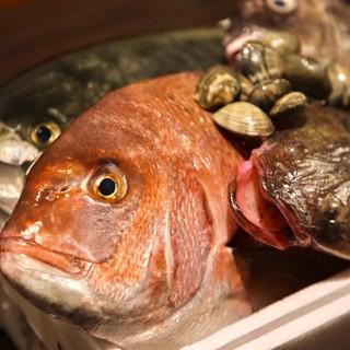 【毎朝直送】瀬戸内海の新鮮な《魚介類》