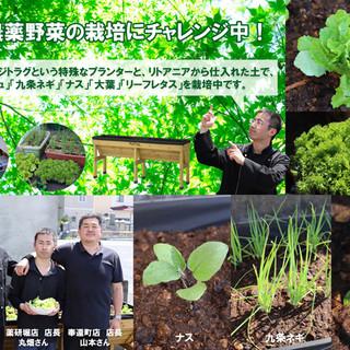 無農薬野菜の栽培にチャレンジ