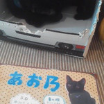 90168078 - お店の猫スタッフは全て黒猫で首輪の色が名前に。あお乃さん。