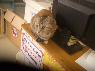 あいきゃっと 仙台店 - 「いらっしゃいませニャ」