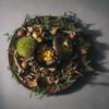 GRAND DIA - 料理写真:季節を大事に考え、その時一番美味しいものを