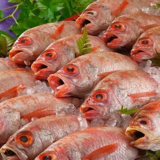 毎日直送!料理長が直接買い付けした新鮮魚介をご堪能ください!