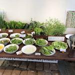 いしぐふー - 2018年8月11日  野菜バイキング