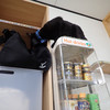 ねこカフェ 猫八