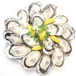 イタリアン酒場 TAKEYA - ぷりぷりの生牡蠣ご用意あります。