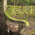 エンボカ 軽井沢 - レストラン中庭にある緑に覆われた雰囲気たっぷりのベンチ