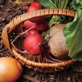 ●契約農家直送の新鮮野菜♪