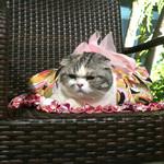 恵比寿 箸庵 - ミーちゃんはプッチの浴衣