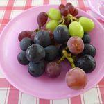 勝果園 - 料理写真:試食品