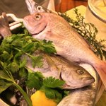 91646451 - 本日の魚:真鯛/いさき/太刀魚