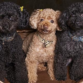 ペット同伴OK♪3匹の可愛い看板犬がお出迎えします!