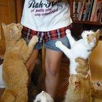 猫の手 -