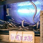 91859843 - ■坂東太郎の鰻