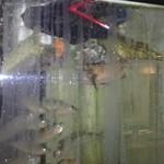 玄海鮨 - タイ、カワハギ、アジ