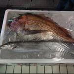廻鮮寿司 塩釜港 - でかい鯛と太刀魚(店頭販売用)・・・側面に値札が貼ってあります