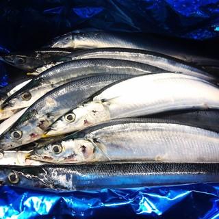 数量限定!とれたて釧路産新秋刀魚!