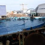 トータス - イルカの上に乗っています