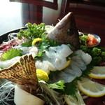珊瑚礁 - イギス(ホウセキハタ)