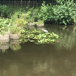 モリトネリ - おまけ、福岡城跡のさぎ