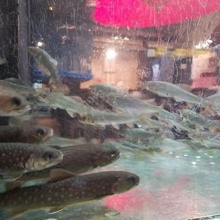 いけすで泳ぐ料亭食材*鮎,岩魚,ほんもろこ,車海老,あわび等