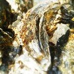 魚酒房 まんま亭 - 夏限定 鳥羽の岩牡蠣