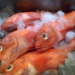 魚酒房 まんま亭 - 名物の北海道産きんき。煮付けでも塩焼きでも。