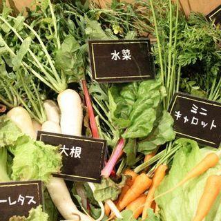 神奈川県相模原市より直送の無農薬・無化学肥料のお野菜