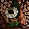 樹花 - 料理写真:先付