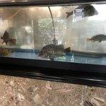 鮨・割烹 花絵巻 - 水槽には鯛、カワハギ、アラカブなどが…(^^)