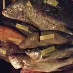 Bistro ひつじや - 本日のお魚たち