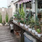 ハンズカフェ - 屋上に置かれたサボテン