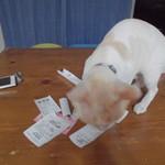 ヤオヨシ - 割引券