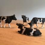 92773672 - 何故か牛のフィギュア